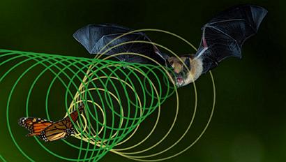 Образец Летучей мыши: Гармоническая Торговля Графиками